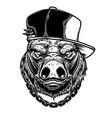 Head boar in baseball cap in vintage