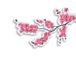 Japanese cherry Branch Cut out of cardboard with vector image vector image