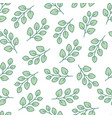 eucalyptus tree branch seamless pattern with line vector image vector image