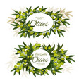 extra virgin olive bunch round label vector image