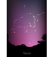 gemini zodiac constellations sign with forest vector image vector image