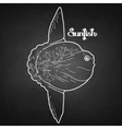Graphic sunfish vector image