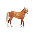 palomino horse vector image