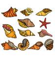 sea shell set vector image vector image