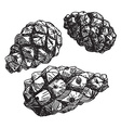 Set of pine cones black contour on a white vector image
