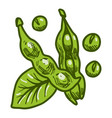 green eco soybean icon hand drawn style vector image vector image