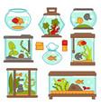 aquarium fish underwater life seaweed indoor