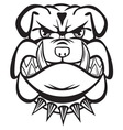 bulldog bw resize vector image vector image
