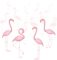 tropical bird flamingos vector image vector image