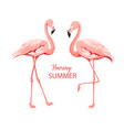 tropical birds pink flamingos set vector image