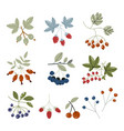 forest berries flat icons blueberry cranberry vector image vector image