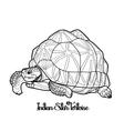Indian star tortoise vector image vector image