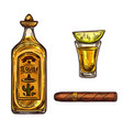 mexican tequila lime drink and cigar sketch vector image vector image