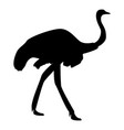 ostrich icon black color flat style simple image vector image vector image