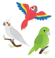 set cartoon parrots vector image