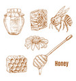 sketches bee and sunflower honey spoon vector image vector image