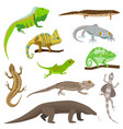 different lizard reptile animals isolated on white vector image vector image