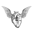 Hand drawn elegant anatomic human heart with wings vector image vector image
