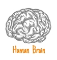 Human brain sketch symbol in gray colors vector image vector image