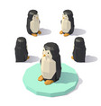isometric low poly penguin vector image vector image