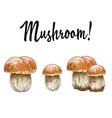 mushrooms orange cap boletus isolated on white vector image vector image