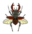 stag-beetle isolate on white background graphics vector image vector image