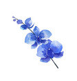 watercolor blue orchid flower isolated on vector image