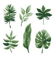 watercolor tropical leaves vector image vector image