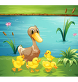 A mother duck with her ducklings in the river vector image vector image
