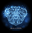abstract polygonal tirangle animal bulldog neon vector image vector image