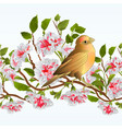 border seamless background small bird thrush vector image vector image
