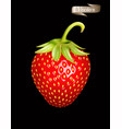 red strawberry realistic 3d isolated vector image vector image