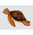 sea turtle on transparent background vector image vector image