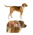 set of hunting dog profile images vector image