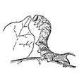 sphinx moth larva vintage vector image vector image