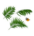 three palm leaves set vector image vector image