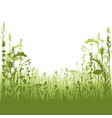 herbal silhouette background vector image vector image