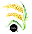 watercolor millets painted isolated superfood vector image vector image