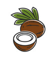 delicious coconut with palm leaves isolated vector image