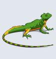 hand drawn colorful gecko lizard reptile vector image