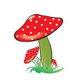 Red poison mushroom vector image