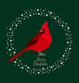cardinal bird merry christmas card vector image vector image