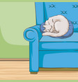 cute white cat pet animal sleeping on a blue vector image