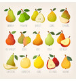 kinds pears vector image vector image