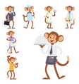 monkeys rare animal cartoon macaque like vector image