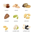 Seeds and nuts icons in cartoon style vector image vector image