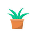 green indoor plant in clay pot for office decor vector image