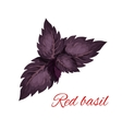 Red basil herb leaves isolated emblem vector image