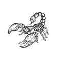 scorpion sketch engraving vector image vector image