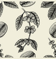 branch of coffee vector image